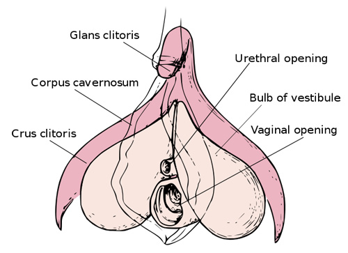 Share your enlarge clitoris and pain can not