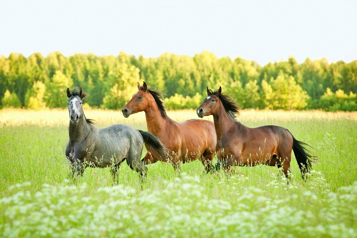 25 Fun Facts About Horses