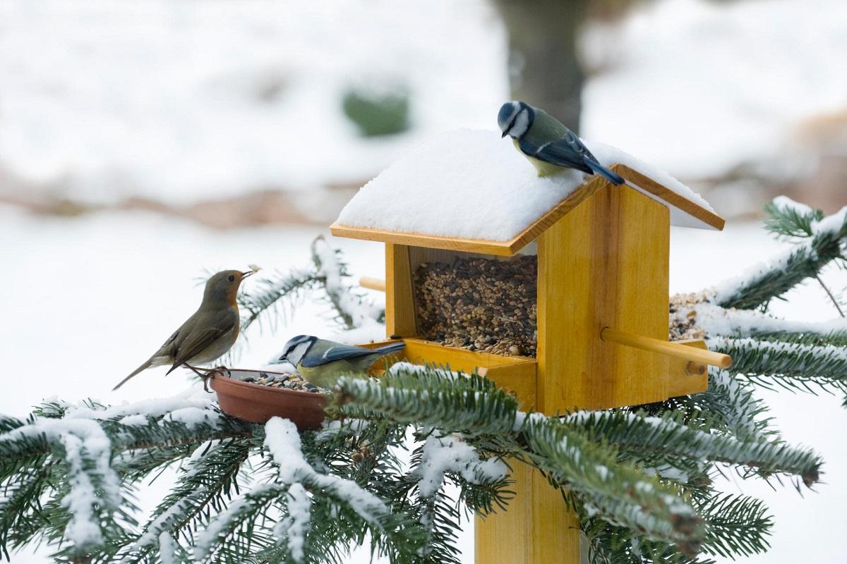 7 Ways to Help Wild Animals Survive This Winter