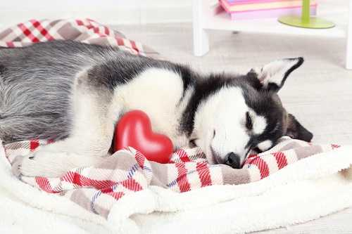 Fun Ways to Celebrate Valentine's Day with a Beloved Pet