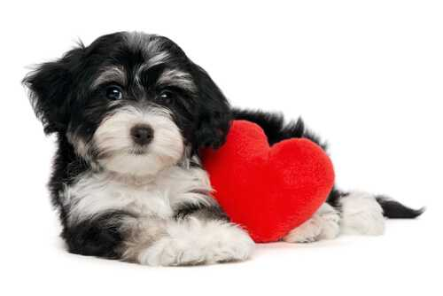 Millions of people buy Valentine cards for their pets