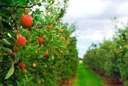 Visit a fruit farm