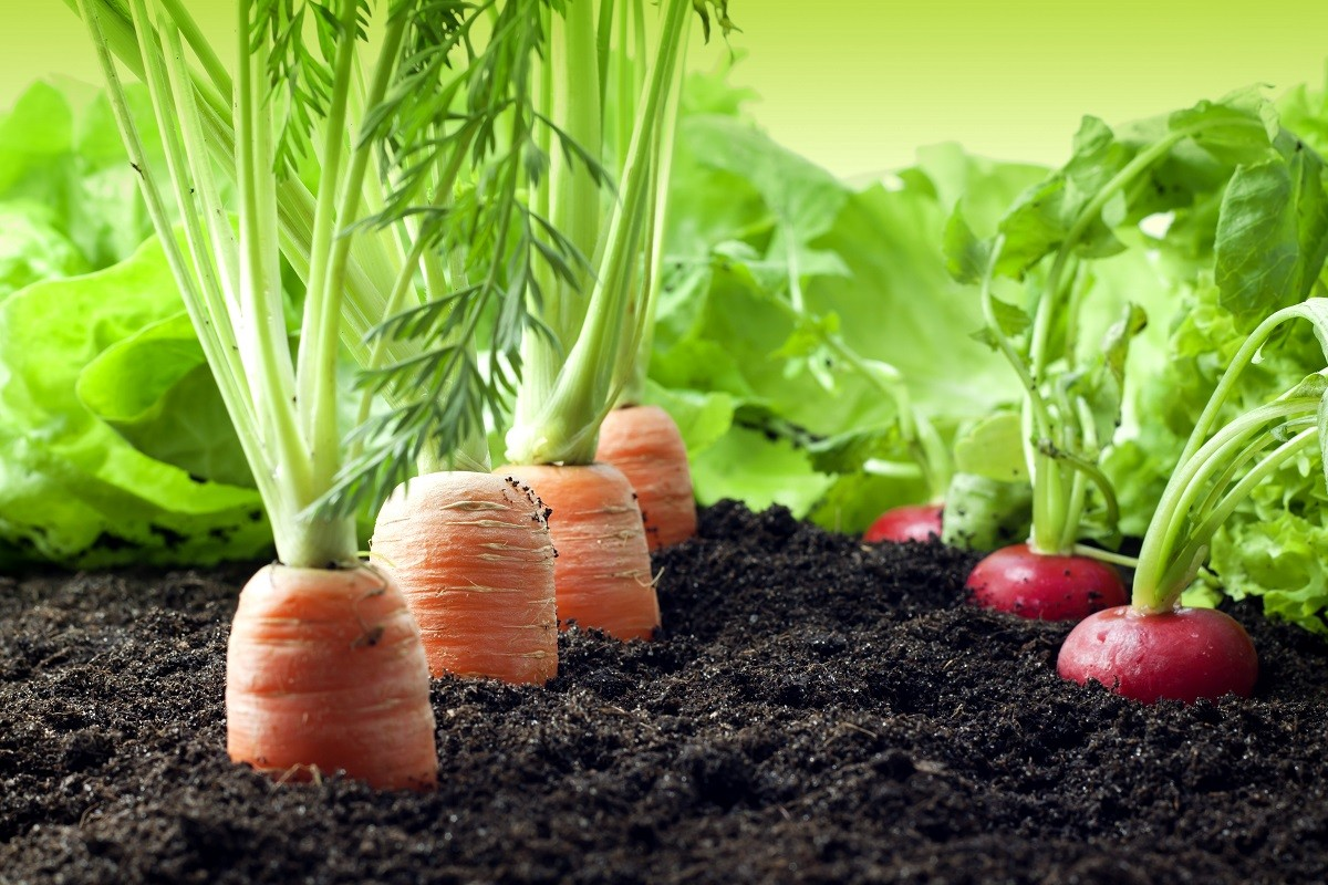 5 Tips for Making Money Growing Vegetables