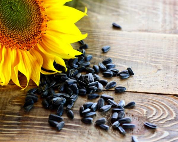 Foods That Help Fight Cellulite Sunflower Seeds