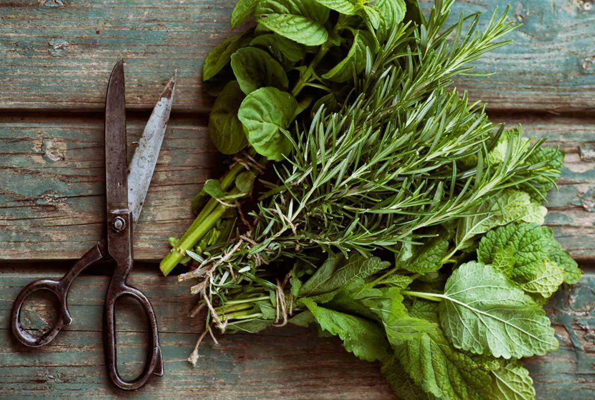 7 Incredible Herbs to Eat to Fight Acne
