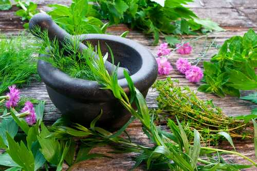 What herbs make breasts grow