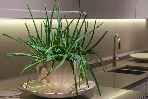 Skin Soothing Plants