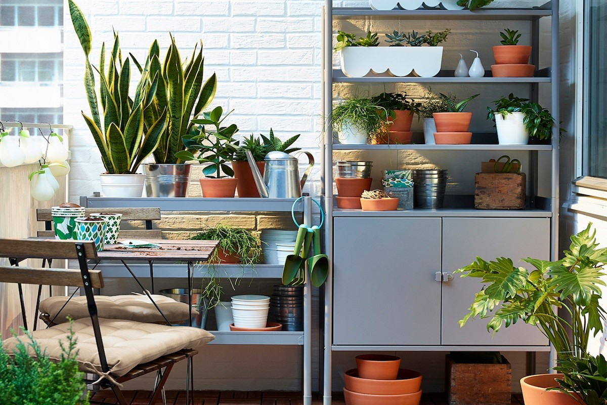 7 Magnificent Plants That You Can Grow at Home