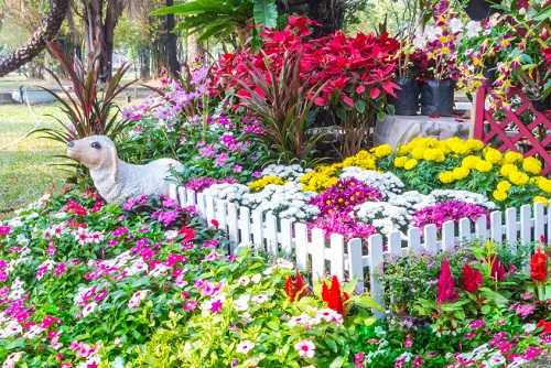 10 Beautiful Flowers You Really Need in Your Garden