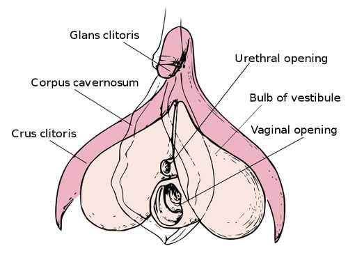 4 Common Infections of the Clitoris