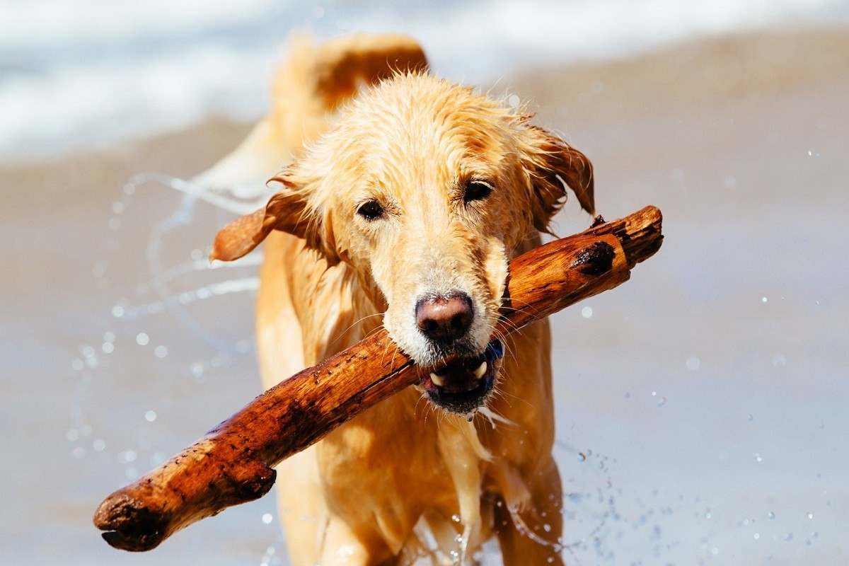 5 Tips for Overcoming the Fear of Dogs