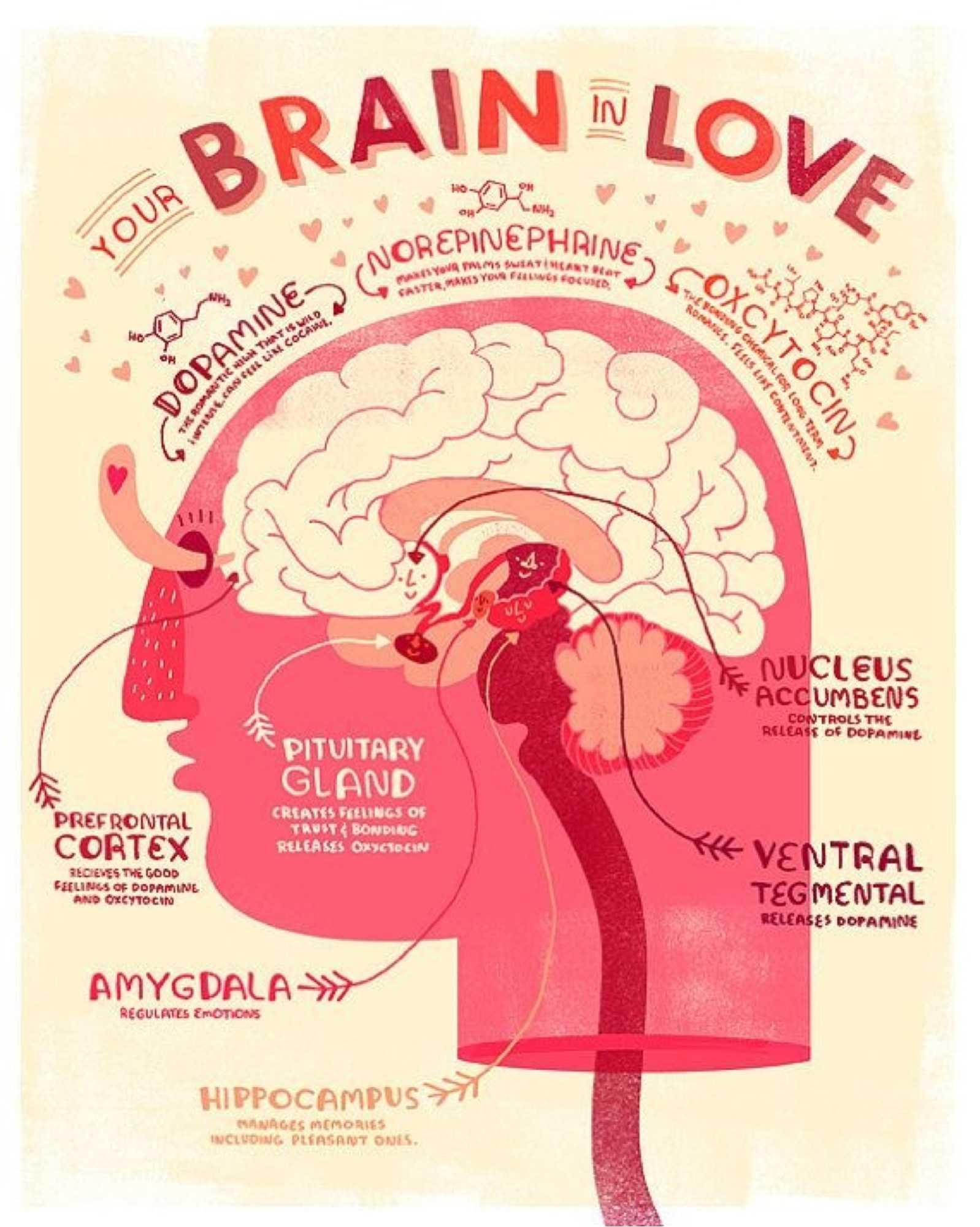 Your Brain In Love