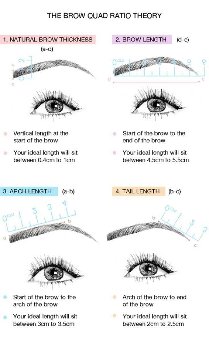 The Brow Quad Ratio Theory