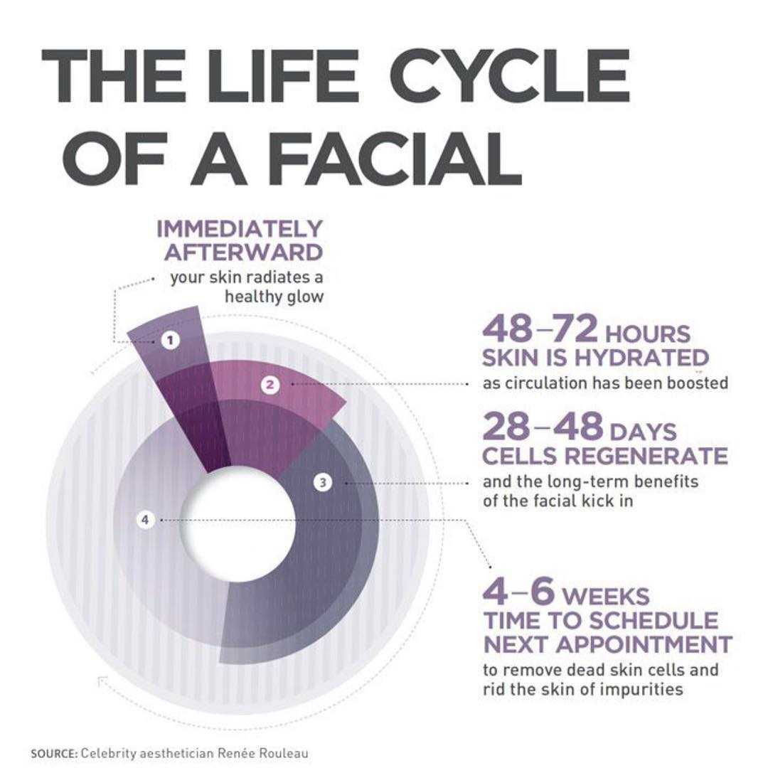 The Life Cycle Of A Facial