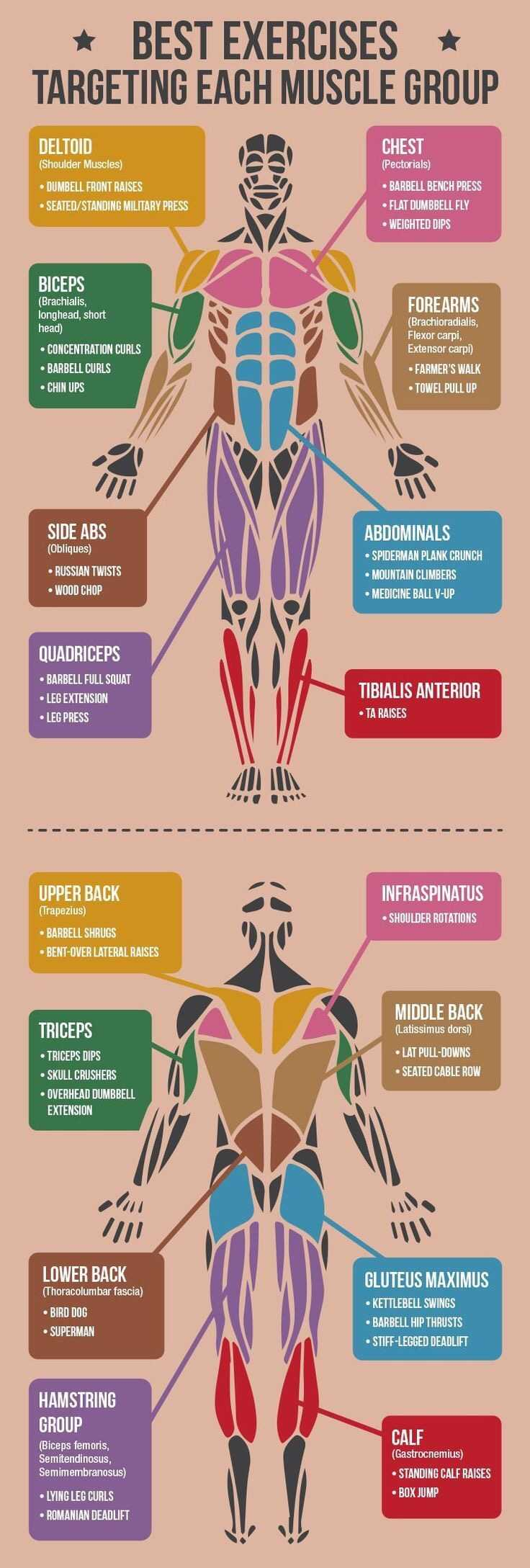 Best Exercises For Targeting Each Muscle Group