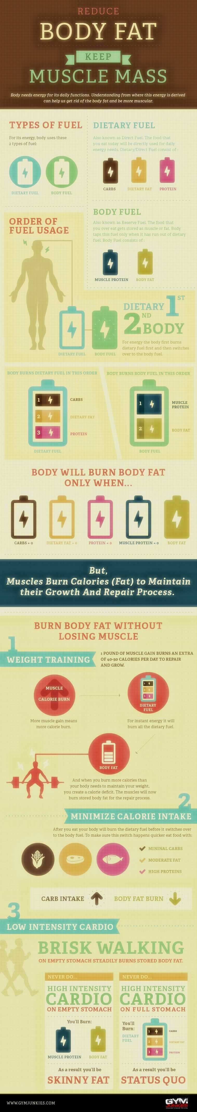Reduce Your Body Fat Keep Muscle Mass