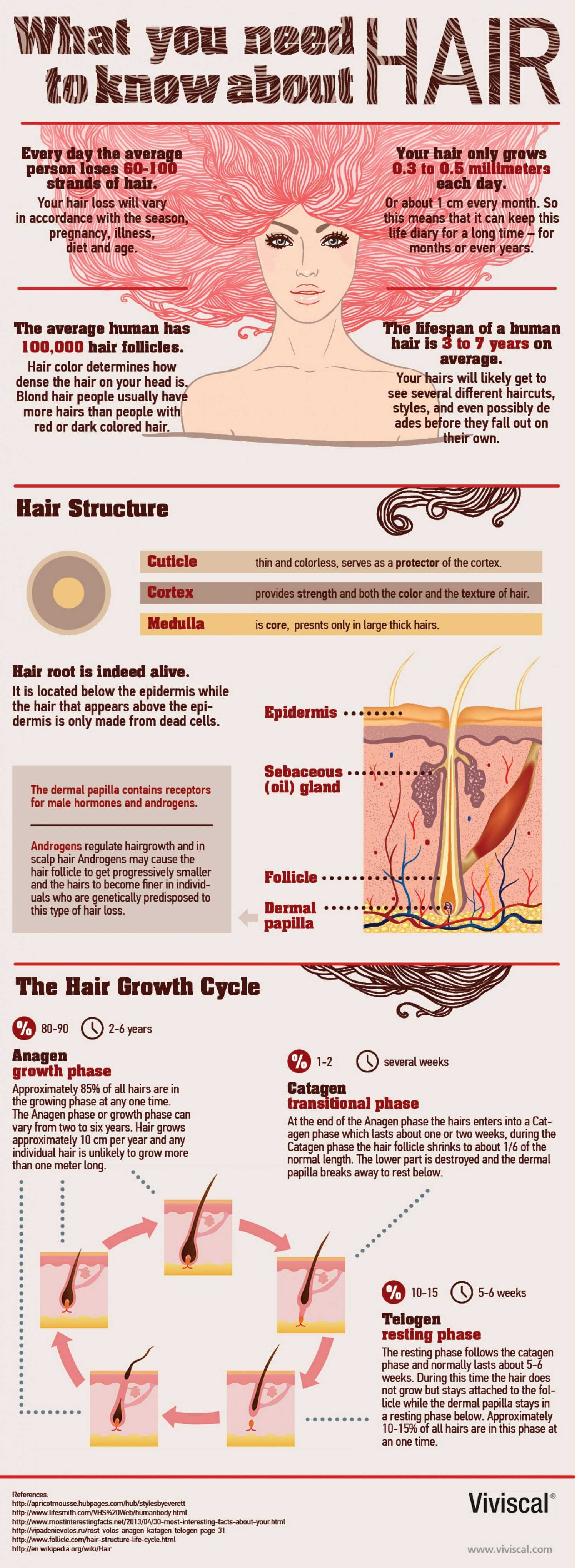 What You Need To Know About Hair