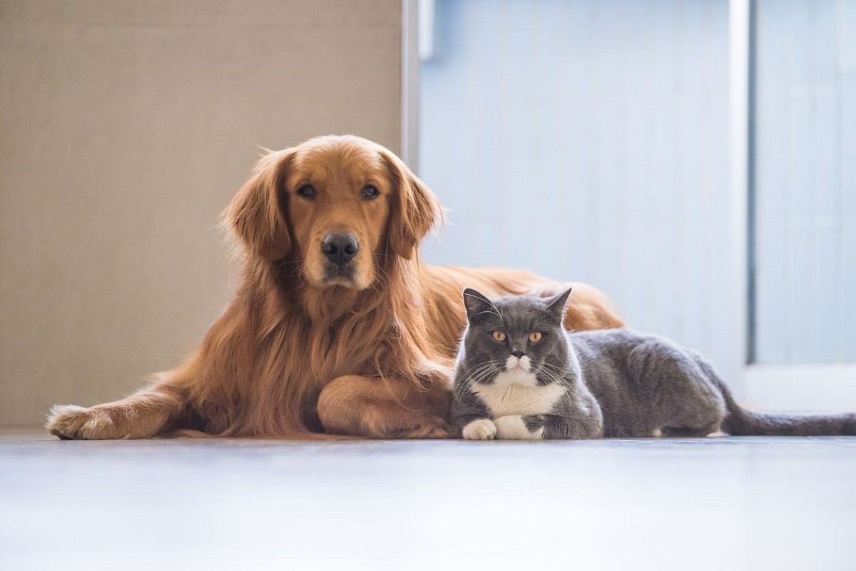 4 Natural Remedies to Manage Feline and Canine Diabetes