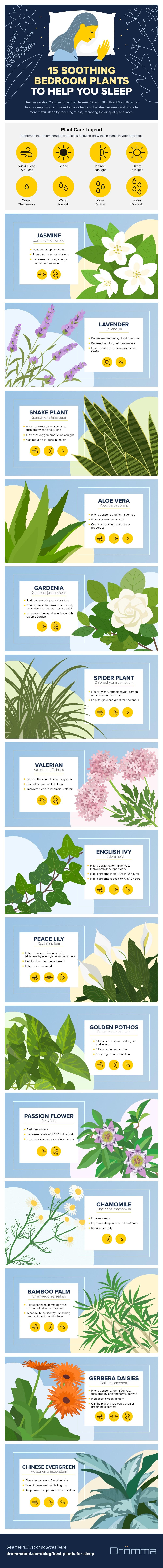 15 Indoor Plants that Help You Get a Good Night's Sleep