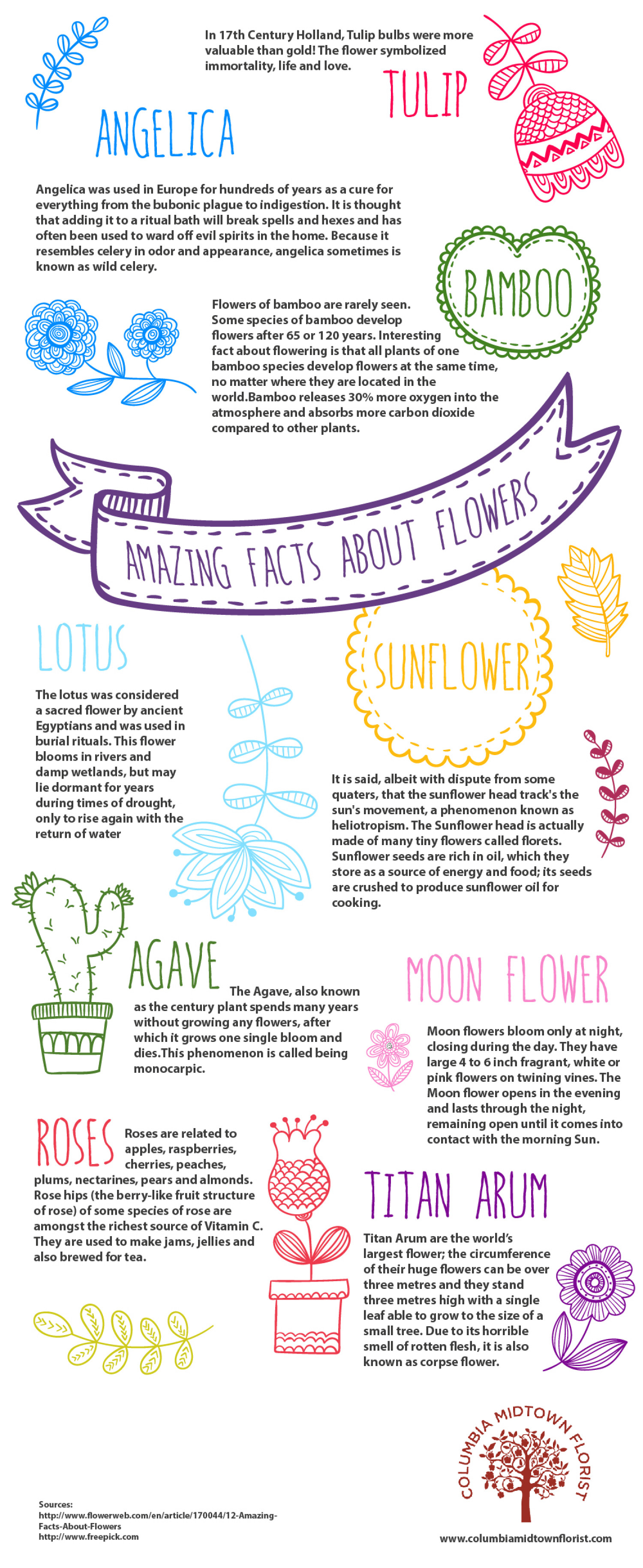 Amazing Facts About Flowers